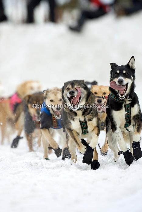 Bill Steyers Dogs During 2005 Iditarod Ceremonial Start