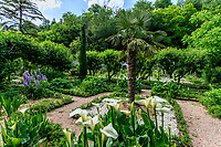 France, Indre-et-Loire (37), Amboise, château Gaillard, jardin de parquets pacelliens, carré avec arum d'Ethiopie, lupins, au centre un palmier de Chine et aux angles des cyprès de Florence