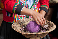Quechua woman shows plants used to dye wool Cusco Peru, South America