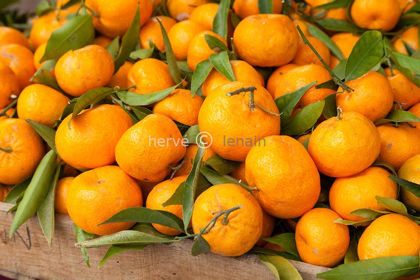 France, Alpes-Maritimes (06), Menton, dans les jardins Bioves lors de la fête du Citron, stand de la pépinière de la Colla de Laurent Gannac, mandarines.