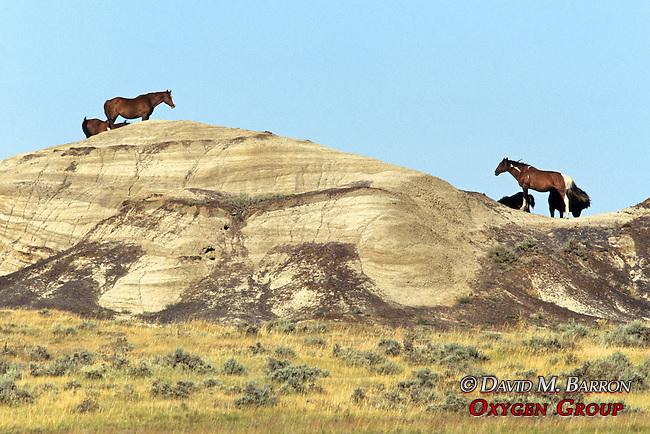 Montana Horses