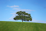 A tree sits on a hill at Eastern Creek .Sydney, Australia. Saturday 12th April 2014. (Photo: Steve Christo)