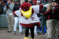 Cocky, the mascot of the South Carolina Gamecocks before the Reedy River Rivalry game against the Clemson Tigers on Saturday, February 28, 2015, at Fluor Field at the West End in Greenville, South Carolina. South Carolina won, 4-1. (Tom Priddy/Four Seam Images)