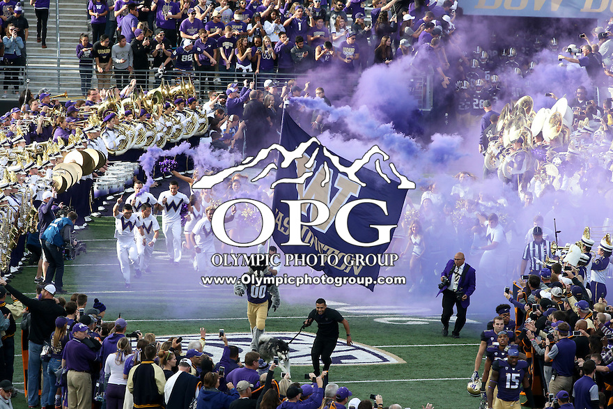 22 October 2016:  Washington cheerleader lead the football team onto the field against Oregon State at the University of Washington in Seattle, WA.