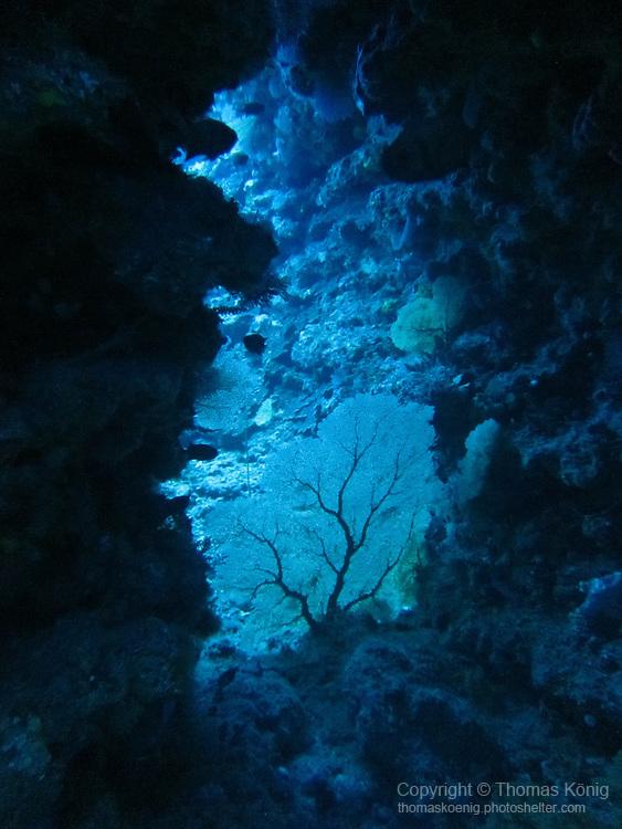 Orchid Island (蘭嶼), Taiwan -- Sea fan in an underwater cavern at Jichang Waijiao (機場外礁)