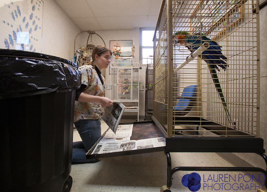 Ariana Clements, of Columbus, an assistant at the Avian Health Clinic for about 2 years, changes the cage papers of a Catalina Macaw parrot in the clinic's waiting room.