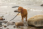 St. Mary's River channel. Gilly- Labrador Retriever with stick.