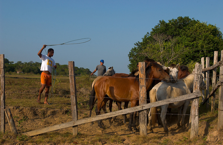 A young peão boiadeiro, or cowboy, ropes a horse to take in for the next day's work on the island of Marajo (acute accent on the final o). The size of Switzerland, Marajo is a vast expanse of wilderness and cattle and water buffalo ranches, offering a close look at rural life in equatorial Brazil. (Kevin Moloney for the New York Times)