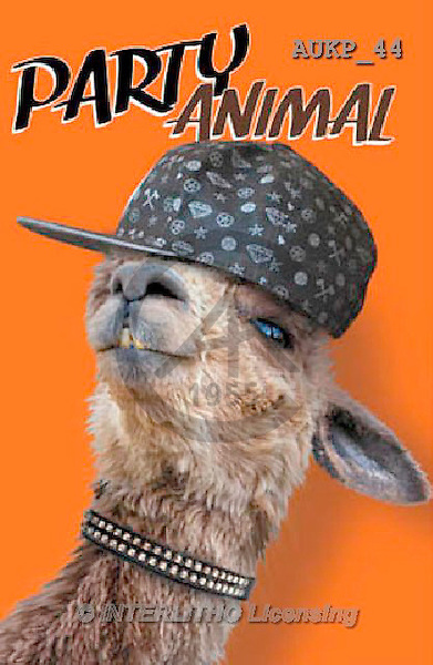 Samantha, ANIMALS, REALISTISCHE TIERE, ANIMALES REALISTICOS, funny, photos+++++Party Alpaca Master,AUKP44,#a#