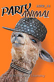 Samantha, ANIMALS, REALISTISCHE TIERE, ANIMALES REALISTICOS, funny, photos+++++Party Alpaca Master,AUKP44,#a#