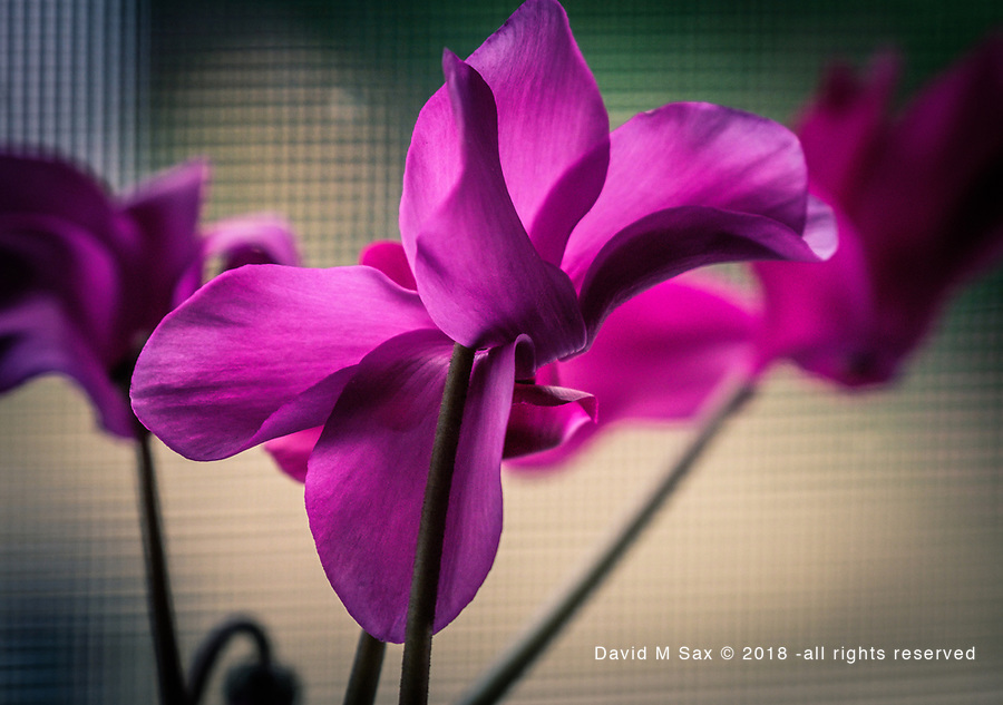 7.9.18 - Pretty In Purple....
