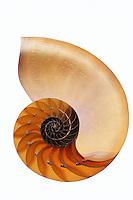Nautilus<br />