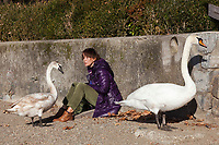 Switzerland. Canton Ticino. Lugano. An elderly woman seats on the rocks close to the lake in the Parco Ciani. She enjoys the winter sun and gives bread to two swans. Swans are birds of the family Anatidae within the genus Cygnus. 30.12.2018 © 2018 Didier Ruef