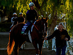 October 26, 2019 : Breeders' Cup Turf entrant United, trained by Richard E. Mandella, exercises in preparation for the Breeders' Cup World Championships at Santa Anita Park in Arcadia, California on October 26, 2019. Scott Serio/Eclipse Sportswire/Breeders' Cup/CSM