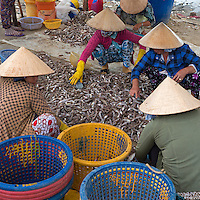 Vietnam with its coastline spanning over 3000km Vietnam is an ideal country to boast a strong seafood industry, including both aquaculture and open ocean fishing. Mũi N&eacute; is a coastal fishing town in the B&igrave;nh Thuận Province of Vietnam. The town, with approximately 25,000 residents is a ward of the city of Phan Thiết. <br />