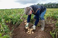 Assessing potato quality - Lincolnshire, September