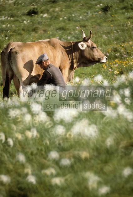 Europe/France/Languedoc-Roussillon/48/Lozère/Aubrac : Traite des vaches<br /> PHOTO D'ARCHIVES // ARCHIVAL IMAGES<br /> FRANCE 1980