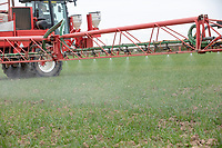 Spraying winter wheat with fungicide - Licolnshire, March