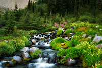 Paradise River with summer wildflowers. Mt. Rainier National Park, Washington