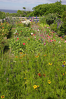 Celia Thaxter's recreated garden on Appledore Island, Isles of Shoals..Photograph by Peter E. Randall