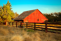A red barn sits in an overgrown field on an abandoned almond orchard