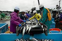 Japanese fisherman processing Japanese Mackeral at Miyako Bay during reconstruction efforts following the 311 Tohoku Tsunami in Miyako, Japan  © LAN