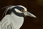 Florida Birds Special