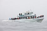 Whale & Marine Life Watching Ferry