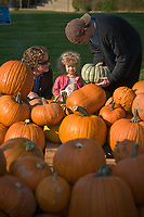 A 2-year-old and her parents search for the best pumpkins among the hundreds displayed for sale in the front yard of the Masonic Temple in Westerville, OH. The pumpkins are a fund raiser for Boy Scout Troop 560.