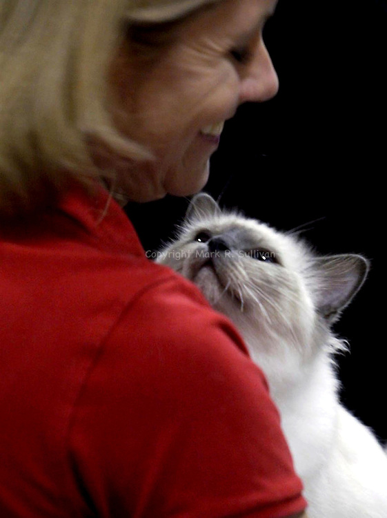"""CAT SHOW""<br /> ""Zima"" a Blue Point Berman cat looks to owner Liz Thomasson of Annapolis , MD during the 2002 Garden State Cat Club Cat show held at the Garden State Exhibition Center, Franklin."
