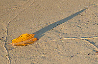 A autumn colored leaft sits on the sand on the Lake Superior shore at Miner's Beach and casts a long shadow in late afternoon light, Pictured Rocks National Lakeshore, Alger County, Michigan