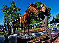 LOUISVILLE, KENTUCKY - MAY 02: Battle of Midway, owned by Fox Hill Farms, Inc. and trained by Jerry Hollendorfer, gets a bath after exercising in preparation for the Kentucky Derby at Churchill Downs on May 2, 2017 in Louisville, Kentucky. (Photo by Scott Serio/Eclipse Sportswire/Getty Images)