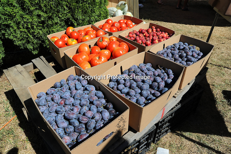 Boxes of Fruits at Orchard Farmstand in New Hampshire USA