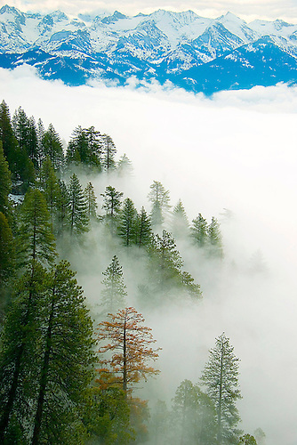 FOG ROLLS INTO GIANT FOREST DURING WINTER AS SEEN FROM MORO ROCK, SEQUOIA NATIONAL PARK, CALIFORNIA