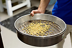 April 19, 2016. Durham, North Carolina. <br />  After modified soy bean pants are grown to seed bearing age, they are picked and the seeds sorted very carefully according to their specific trait(s). The seeds are then shipped to facilities that will conduct field tests on the seeds. It takes an average of 15 years and $130,000,000 to bring one seed and trait to market.<br />  The Bayer Crop Science Research Triangle Park main campus houses 2 large greenhouses which are used to test grow many of the seeds that are modified nearby at the Innovation Center. Another greenhouses is currently under construction.