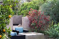 Callistemon 'Slim' flowering shrub by wall in outdoor garden room, California summer-dry garden with Australian plants; design Jo O'Connell