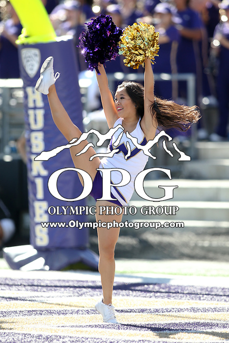 10 September 2016:  Washington cheerleader entertained fans at the University of Washington in Seattle, WA.