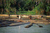 Nr Manaus, Amazonas State, Brazil; two workers walking on logs being floated down the river to a sawmill.