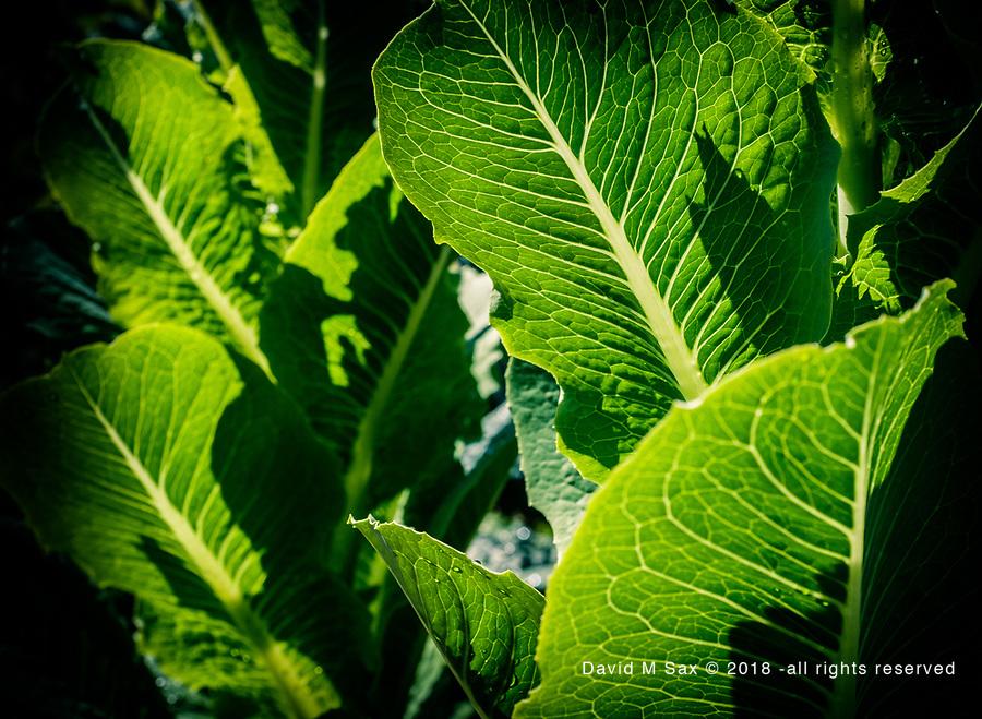 7.16.17 - Lettuce Us Entertain...