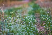 Flores en la primavera y verano en el municipio de Nacozari Sonora y sus Alrededores. Carretera  a Esqueda Sonora, Fronteras Sonora en la primavera. <br /> ** &copy; Foto:LuisGutierrez/NortePhoto.com