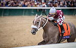 Jaywalk (#7, Cross Traffic), Joel Rosario up, wins the Juvenile Fillies at Churchill Downs 11.02.18. John Servis trainer, D. J. Stable LLC and Cash is King LLC  owners.