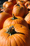 Pumpkins with twisted stems