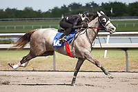 #145Fasig-Tipton Florida Sale,Under Tack Show. Palm Meadows Florida 03-23-2012 Arron Haggart/Eclipse Sportswire.