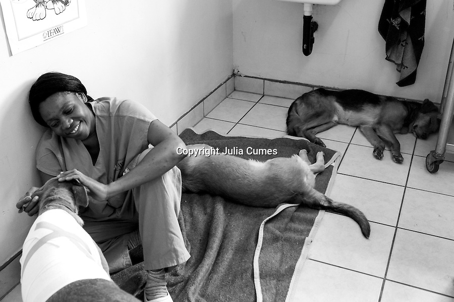 Veterinary nurse, Maidei Musingarabwi, comforts a badly wounded dog after its wounds are redressed at IFAW's CLAW clinic on the grounds of the Durban Deep mine close to Soweto in South Africa. This program provides veterinary services to cats and dogs in some of the poorest shantytowns outside of Johannesburg, South Africa. 2/21/12 Julia Cumes/IFAW