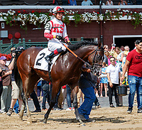 Complexity (no. 2) wins Race 3, Sep. 3, 2018 at the Saratoga Race Course, Saratoga Springs, NY.  Ridden by Jose Ortiz., and trained by Chad Brown, Complexity finished  4 1/4 lengths in front of Harvey Wallbanger (no. 4).  (Bruce Dudek/Eclipse Sportswire)