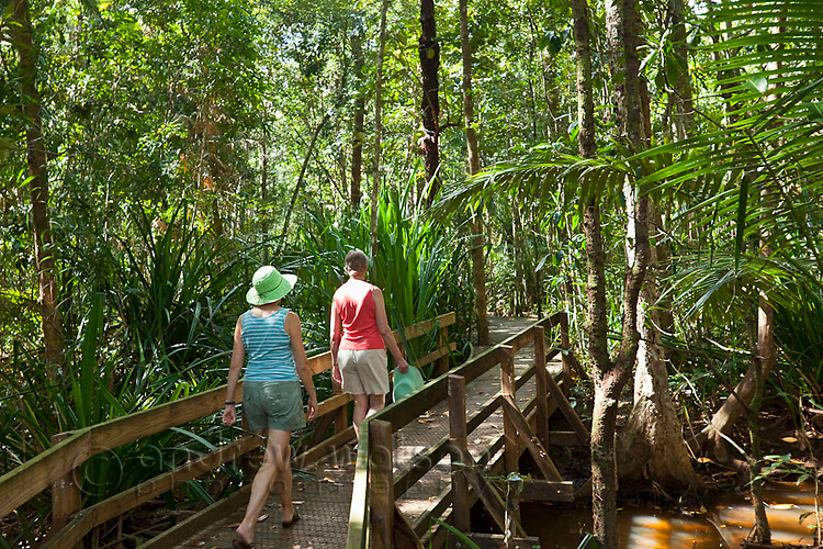 Tourists walking through wetlands rainforest on the Dubuji Boardwalk.  Daintree National Park, Queensland, Australia