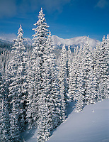 San Isabel National Forest, CO<br /> Fresh snow on pines and mountain ridges near Monarch Pass