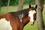 Horses- Seasonal