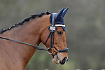 Class 2. British Dressage. Brook Farm training centre. Stapleford abbots. Essex. 10/03/2018. ~ MANDATORY CREDIT Garry Bowden/SIPPA - NO UNAUTHORISED USE - +44 7837 394578