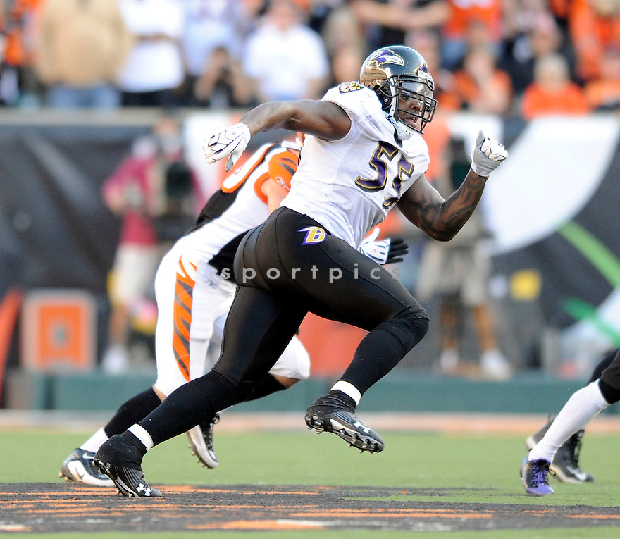 TERRELL SUGGS, of the Baltimore Ravens, in action during the Ravens game against the Cincinnati Bengals on November 8, 2009 in Cincinnati, OH. Bengals won 17-7.